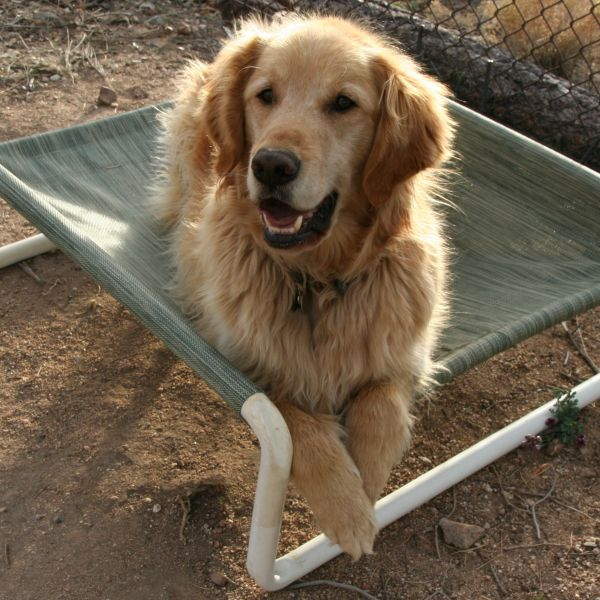 Pets Made In America: Rover Company, High-quality, durable pet products made to last