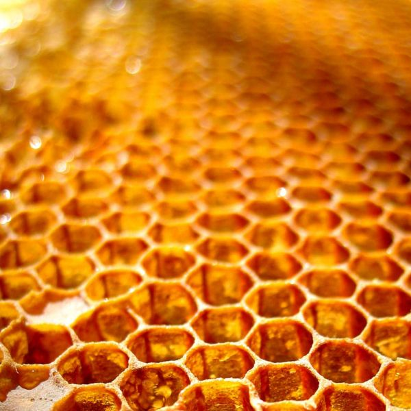 Food Made In America: Brighton Honey, Raw local, natural, organic Honey